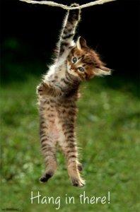 https://www.amazon.com/Kitten-Hang-There-Poster-34in/dp/B0154G6DFU